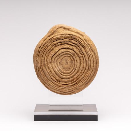 Moroccan Stromatolite + Acrylic Stand // Ver. II