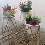 Viola Table Top Planter // Set of 3