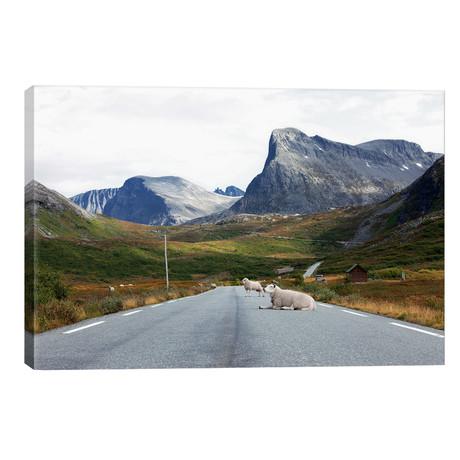 Sheep Relaxing On Mountain Road // Ben Renschen