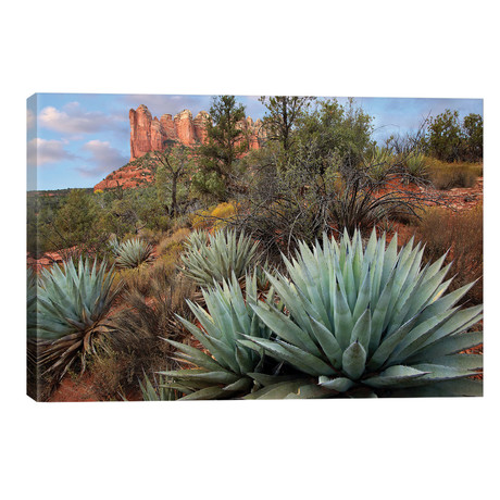 Agave And Coffee Pot Rock Near Sedona, Arizona // Tim Fitzharris