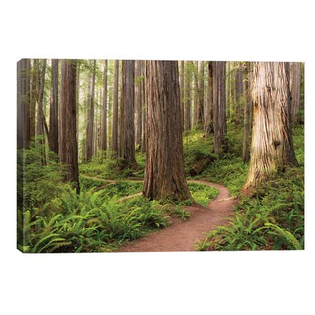 Redwood Trail // Stefan Hefele