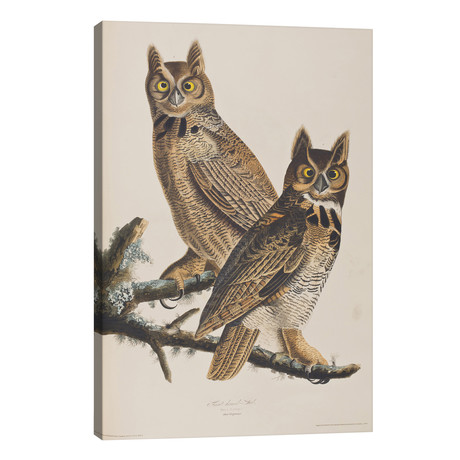 Great Horned Owl // John James Audubon