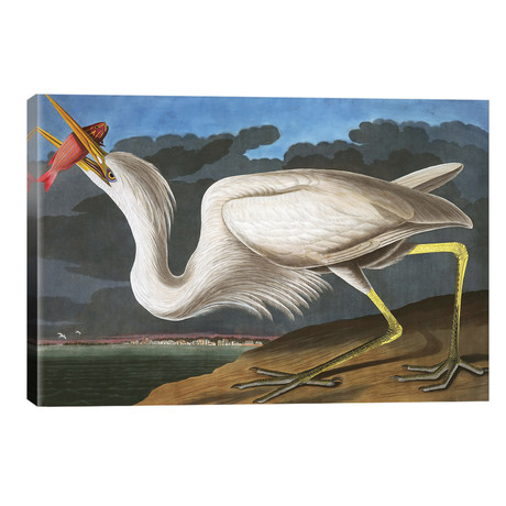 "Great White Heron, Ardea Occidentalis, from ""The Birds of America"" // John J. Audubon, pub. 1827-38 // John James Audubon (40""W x 26""H x 1.5""D)"