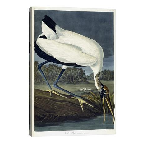 "Wood Ibis, 1834 // John James Audubon (26""W x 40""H x 1.5""D)"