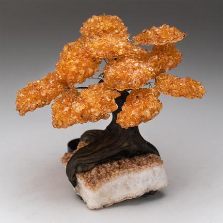 The Tree of Serenity // Citrine Tree + Citrine Matrix // Large