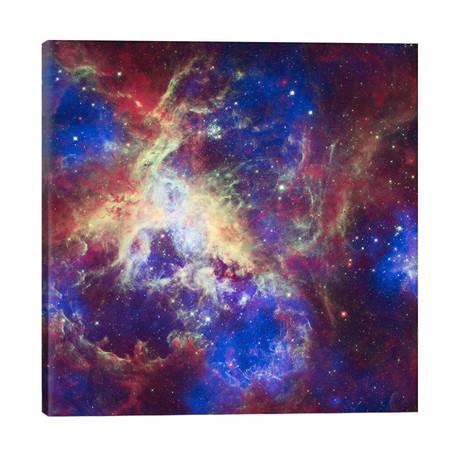 "Tarantula Nebula (Spitzer Space Observatory) // NASA (26""W x 26""H x 1.5""D)"