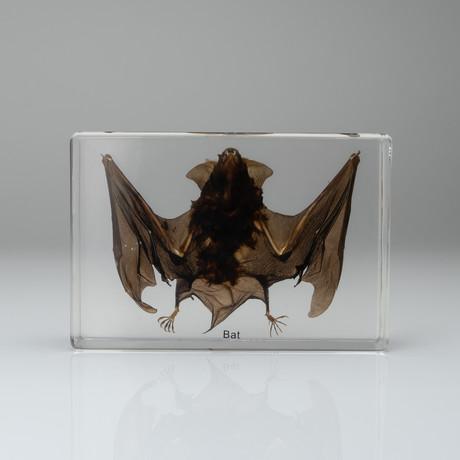 Genuine Bat in Lucite // Large
