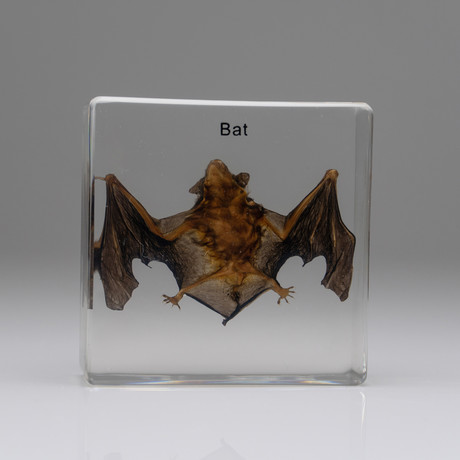 Genuine Bat in Lucite // Small