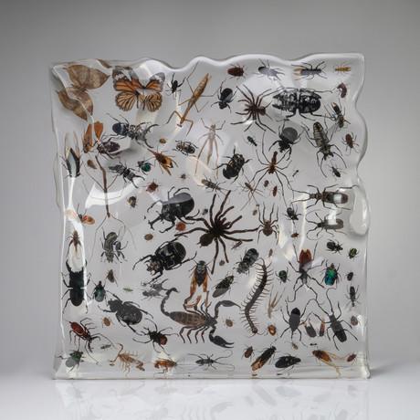 100 Genuine Bugs in Lucite
