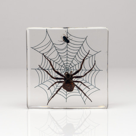 Genuine Spider + Fly in Lucite