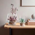 Succulent Glass Vase (Small)
