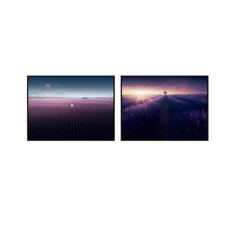 Purple Lavender Field by Samir Belhamra // Small // Set of 2 (Black Frame)