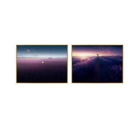 Purple Lavender Field by Samir Belhamra // Medium // Set of 2 (Black Frame)