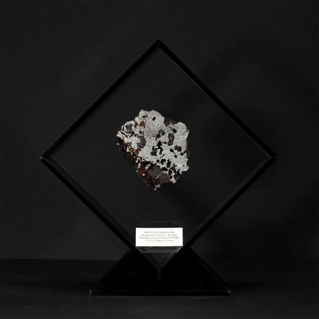Seymchan Olivine Meteorite // Magadanskaya Oblast // Black Acrylic Display // Ver. 1