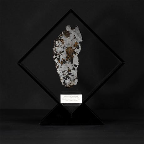 Seymchan Olivine Meteorite // Magadanskaya Oblast // Black Acrylic Display // Ver. 3
