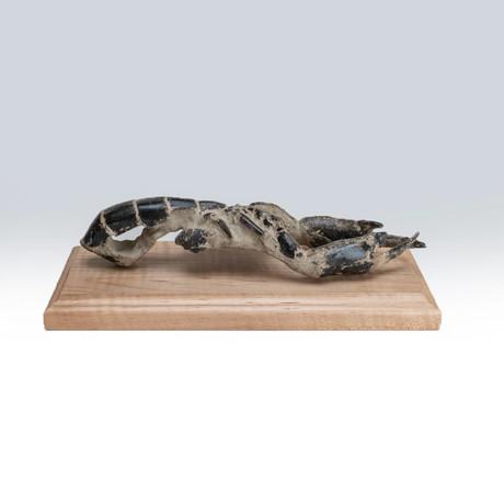 Genuine Arthropod (Crustacean) Lobster + Wooden Display