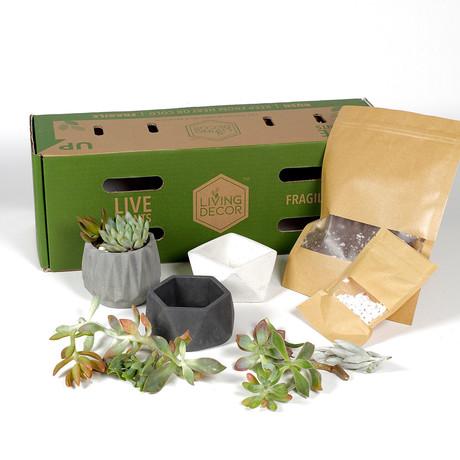 Living Décor 3-Pack Succulent DIY Kits // Neutral