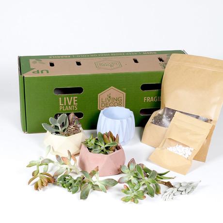 Living Décor 3-Pack Succulent DIY Kits // Colorful
