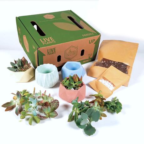 Living Décor 4-Pack Succulent DIY Kits // Colorful