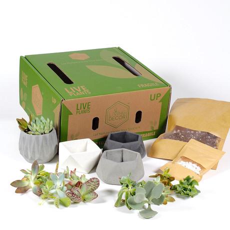 Living Décor 4-Pack Succulent DIY Kits // Neutral