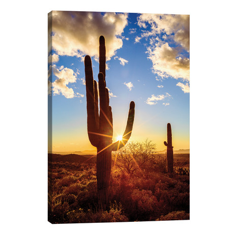 Sunset Saguaro National Park East V // Susanne Kremer