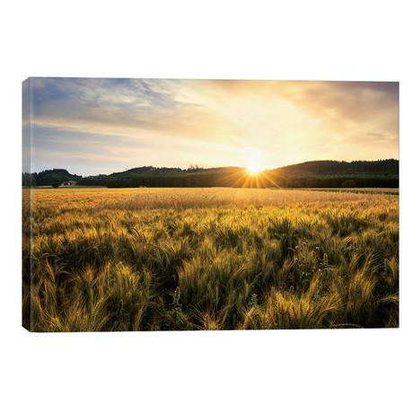 """Golden Land // Stefan Hefele (40""""W x 26""""H x 1.5""""D)"""