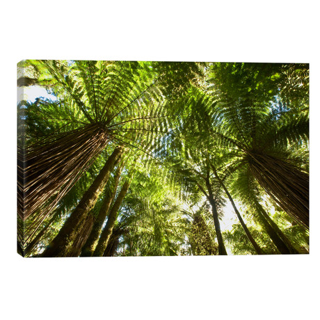 Tree Fern Forest Near Haast Pass, New Zealand // Colin Monteath