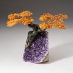 The Money Tree // Custom Citrine Clustered Gemstone Tree on Amethyst Matrix // V2