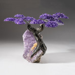 The Protection Tree // Custom Amethyst Clustered Gemstone Tree on Amethyst Matrix // V12