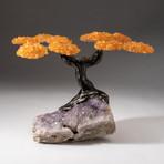 The Money Tree // Custom Citrine Clustered Gemstone Tree on Amethyst Matrix // V3
