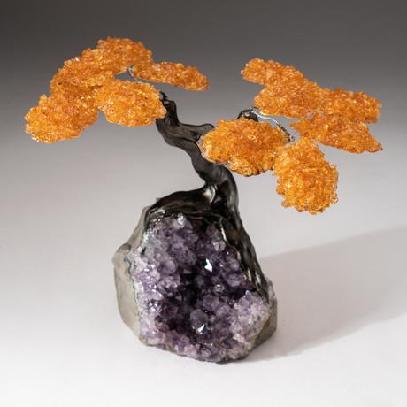 The Money Tree // Custom Citrine Clustered Gemstone Tree on Amethyst Matrix // V8