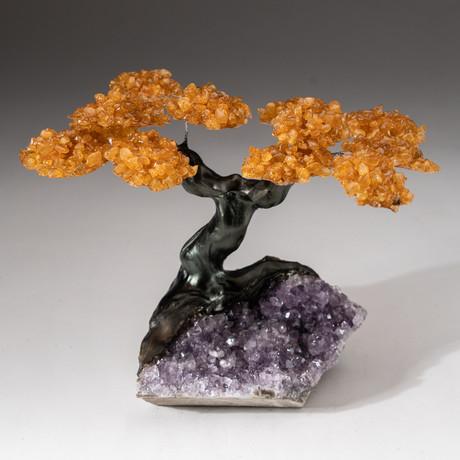 The Money Tree // Custom Citrine Clustered Gemstone Tree on Amethyst Matrix // V10