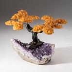 The Money Tree // Custom Citrine Clustered Gemstone Tree on Amethyst Matrix // V9