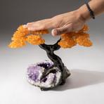 The Money Tree // Custom Citrine Clustered Gemstone Tree on Amethyst Matrix // V6