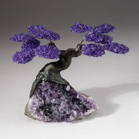 The Protection Tree // Custom Amethyst Clustered Gemstone Tree on Amethyst Matrix // V18