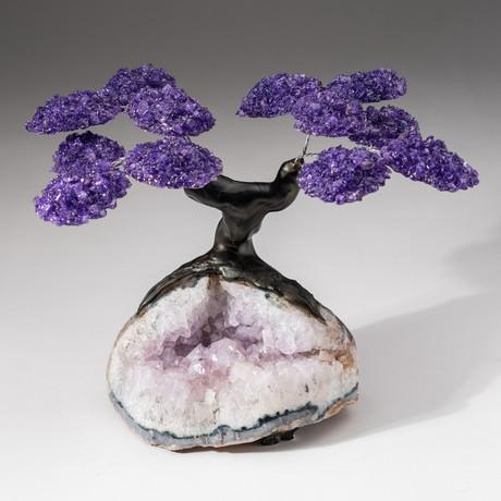 The Protection Tree // Custom Amethyst Clustered Gemstone Tree on Amethyst Matrix // V21