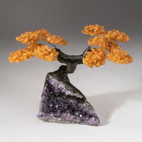 The Money Tree // Custom Citrine Clustered Gemstone Tree on Amethyst Matrix // V13