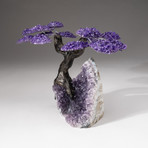 The Protection Tree // Custom Amethyst Clustered Gemstone Tree on Amethyst Matrix // V23