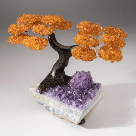 The Money Tree // Custom Citrine Clustered Gemstone Tree on Amethyst Matrix // V15