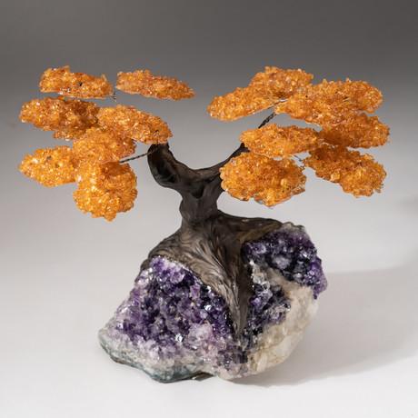 The Money Tree // Custom Citrine Clustered Gemstone Tree on Amethyst Matrix // V16