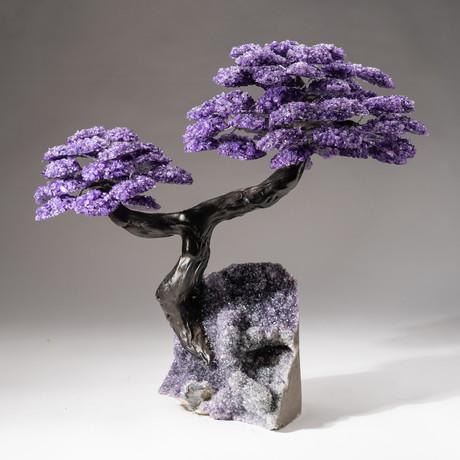 The Protection Tree // Custom Amethyst Clustered Gemstone Tree on Amethyst Matrix // V25