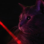 Smart Dot // Bluetooth Cat Laser Toy