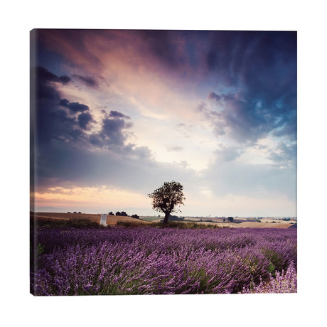 "Tree In Lavender Field, Provence // Matteo Colombo (18""W x 18""H x 1.5""D)"