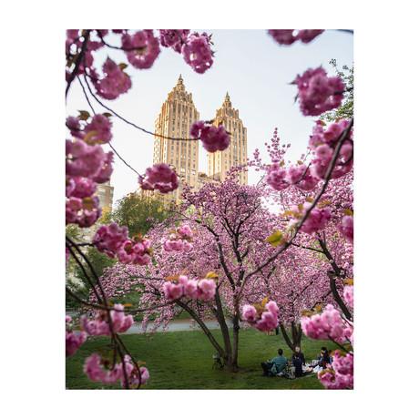 "Spring Central Park (8""W x 10""H)"