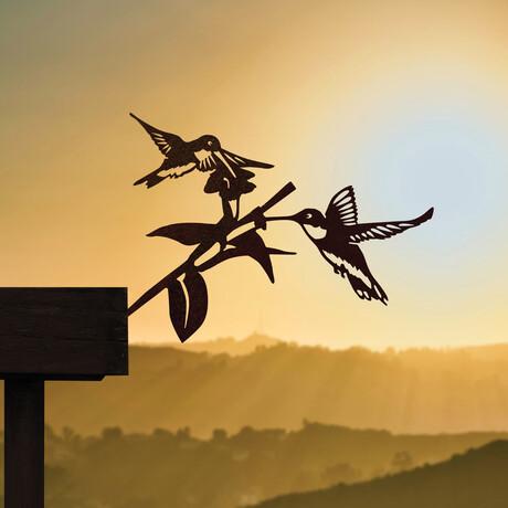 Hummingbird Honeys