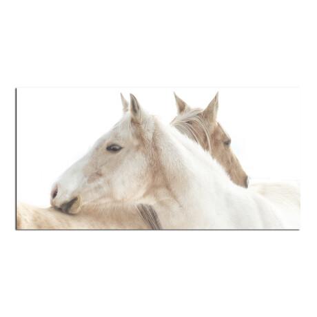 2 Horses // 2 Sides