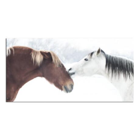 2 Horses // Kissing