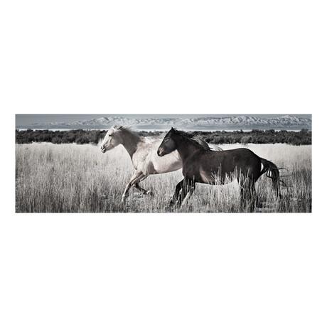"""2 Horses (48""""W x 16""""H x 0.5""""D // Horizontal)"""