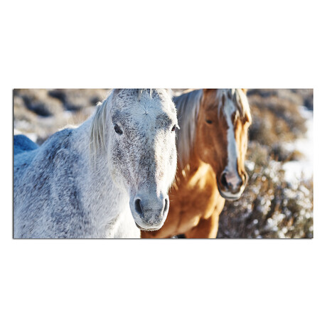 2 Horses // 2 Faces