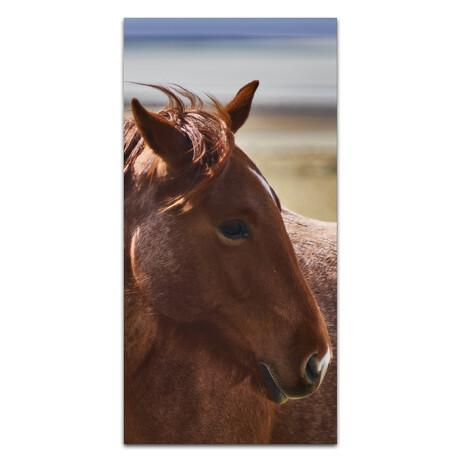 Brown Horse //  Profile